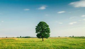 田舎の風景の写真